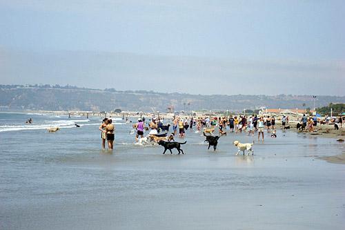 Dog Friendly Beach Coronado Island