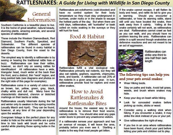 Rattlesnakes 1